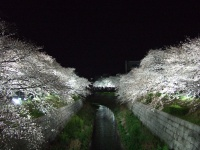 dyn_img:080329_夜桜@山崎川.jpg